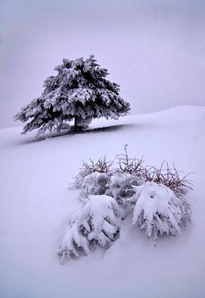 Snow in silence