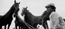 Gypsy horse trader