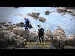 Culinary Seaweed Muiños