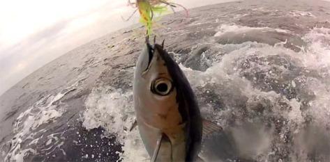 tuna fishing Asturias