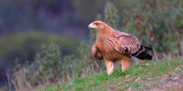 Wildglimpses Birds Spain