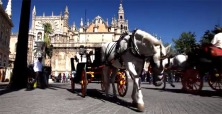 Seville horse carriage