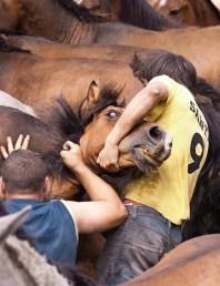 Wrestling wild horses