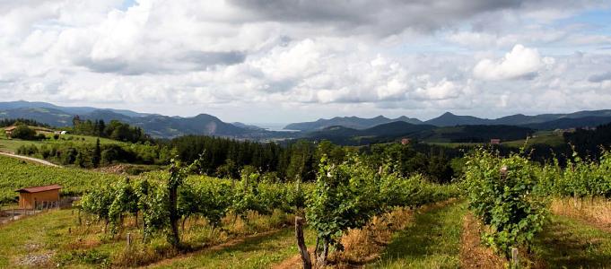 Green Spain vineyards