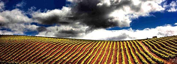 Bierzo vineyards Spain