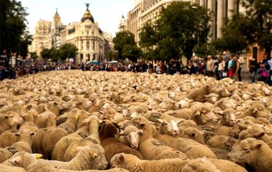 Shepherd protest Madrid