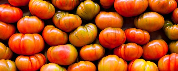 Spanish tomatoes export