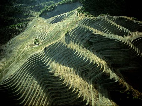 Priorat vineyard Spain